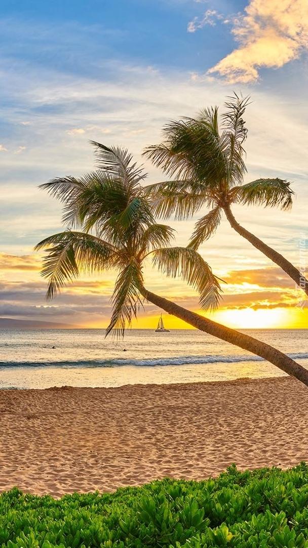 Palmy na tle wschodzącego słońca