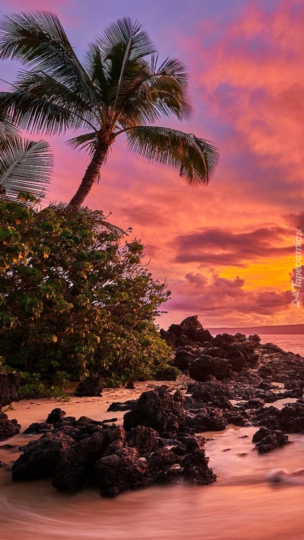 Palmy na wyspie Maui