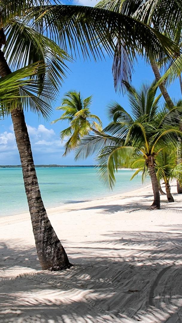 Palmy nad brzegiem morza