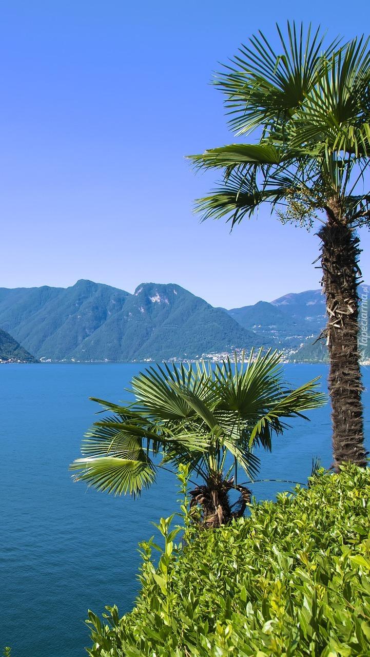 Palmy nad jeziorem Como