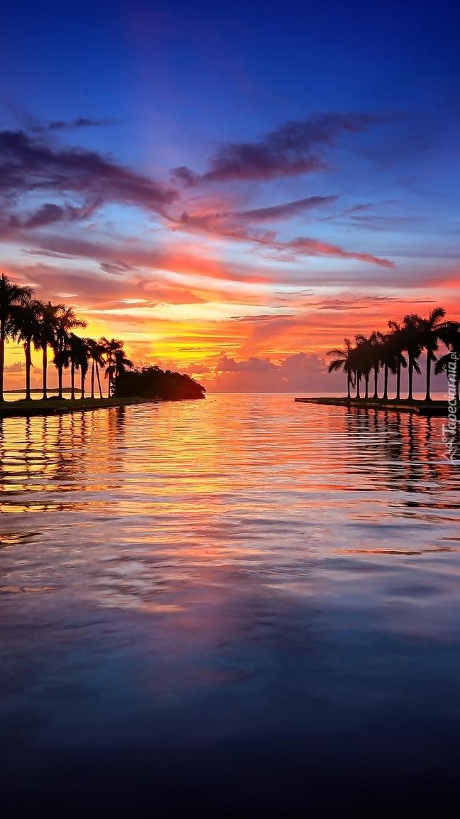 Palmy nad morzem w zachodzącym słońcu