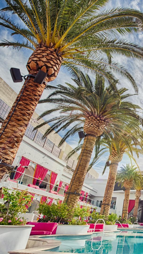 Palmy przy basenie w Cromwell Hotel