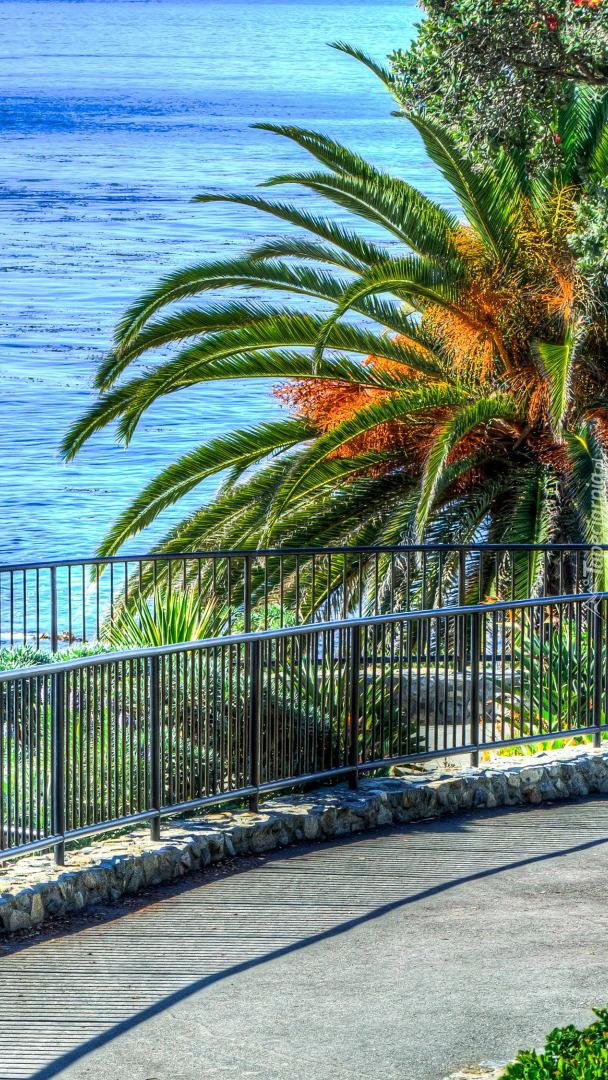 Palmy przy ogrodzeniu
