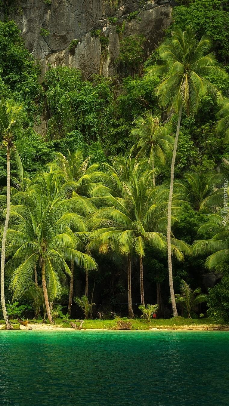 Palmy  u podnóża skały