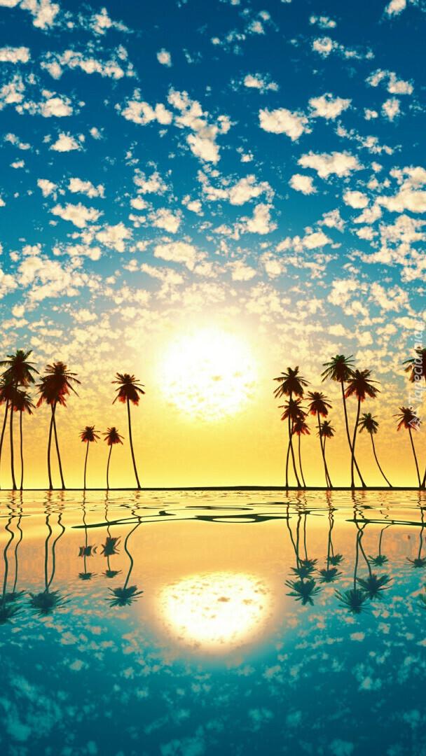 Palmy w morzu