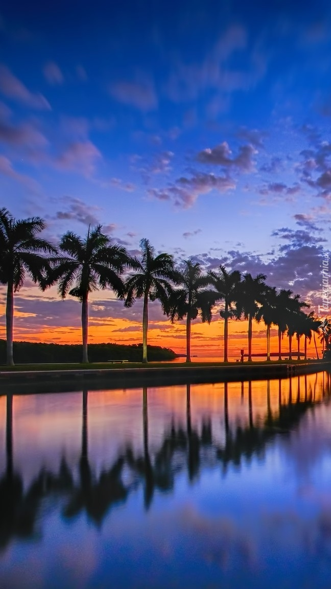 Palmy wzdłuż morza