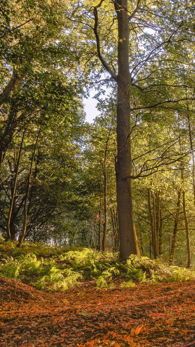 Paprocie pod drzewami w lesie