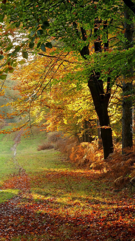 Paprocie pod drzewami