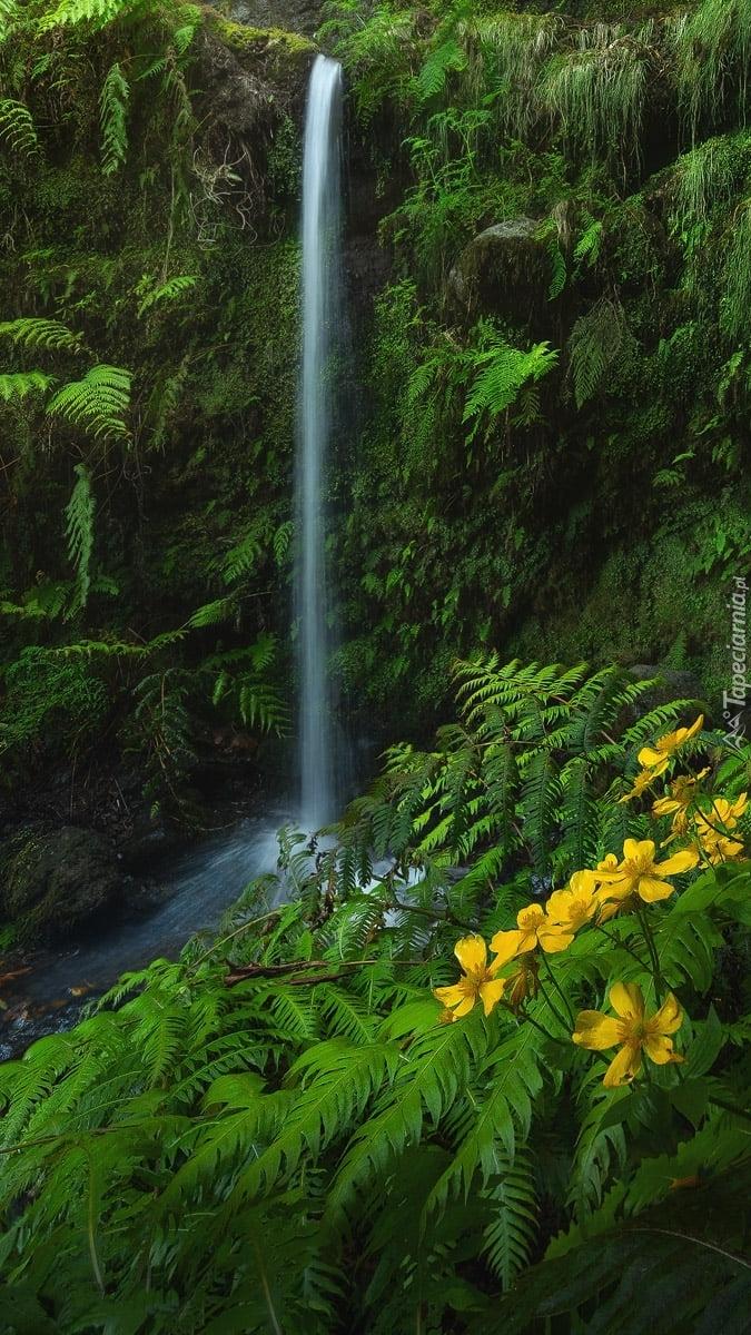Paprocie przy wodospadzie