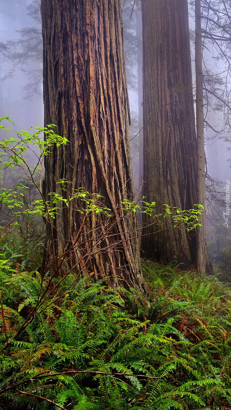 Paprocie rosnące wokół wysokich drzew