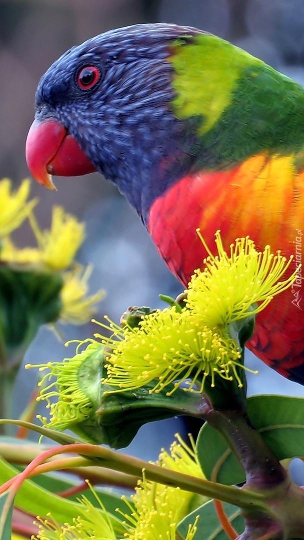 Papuga na gałązce z żółtymi kwiatami