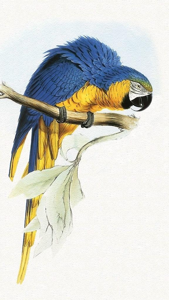 Papuga podciągająca się na drążku
