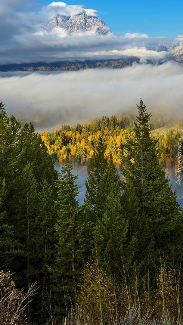 Park Narodowy Grand Teton we mgle
