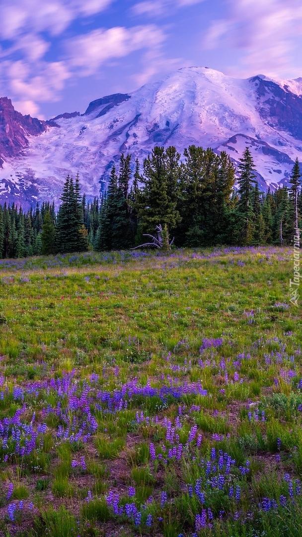 Park Narodowy Mount Rainier