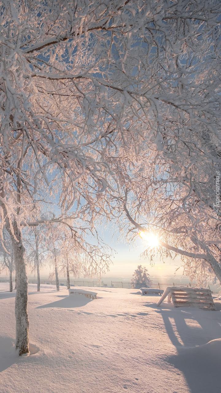 Park zimową porą oświetlony słońcem