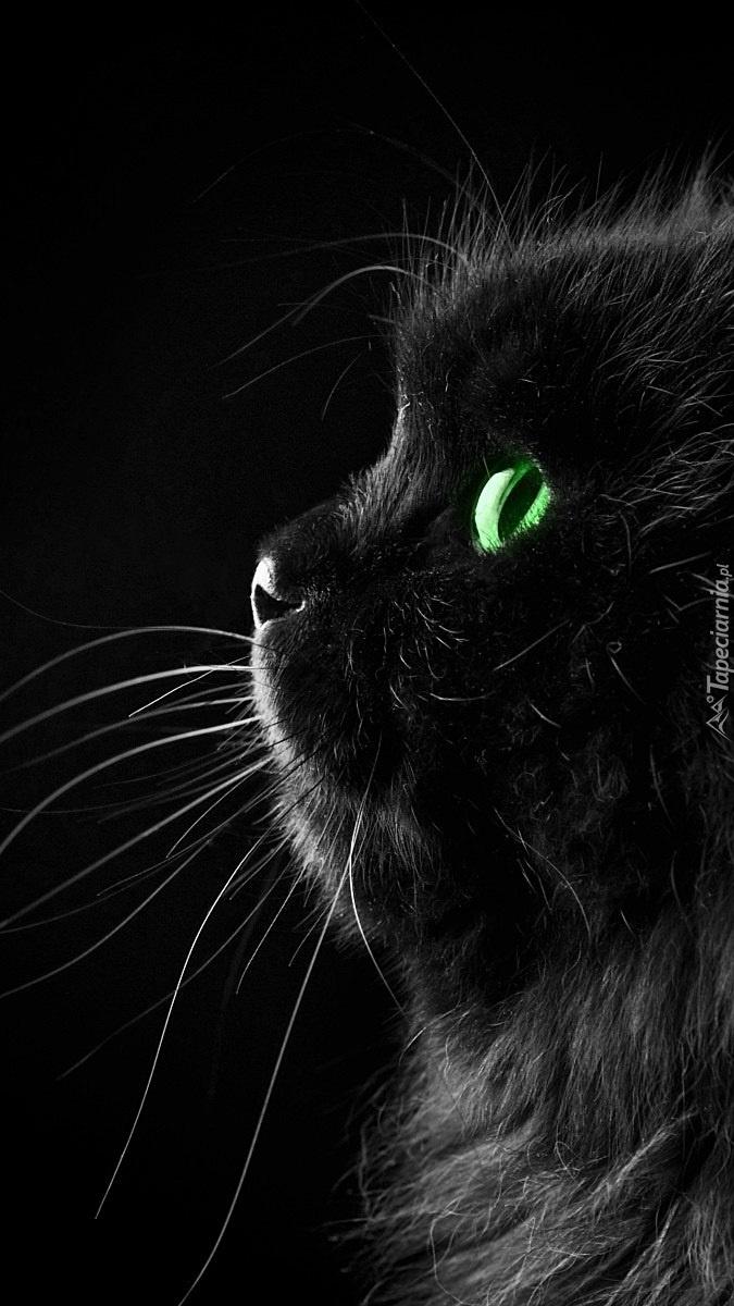 Perski Czarny Kot Tapeta Na Telefon