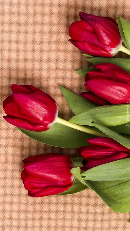 Pięć czerwonych tulipanów