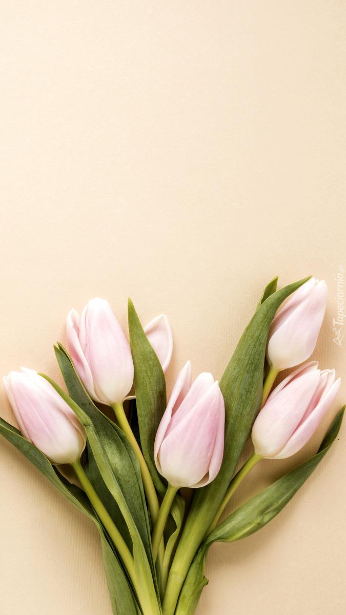 Pięć jasnoróżowych tulipanów