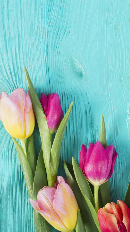 Pięć kolorowych tulipanów