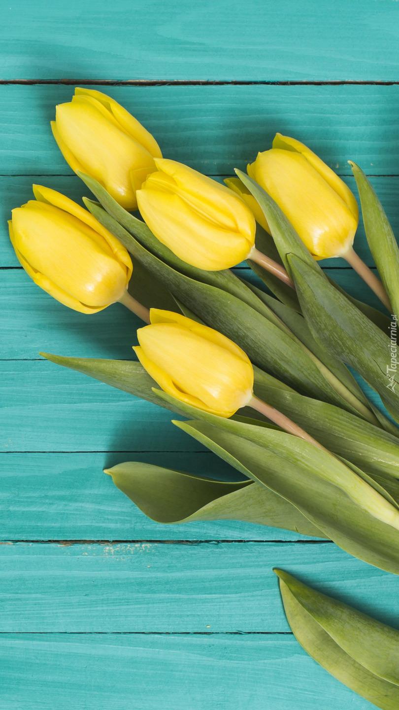 Pięć żółtych tulipanów