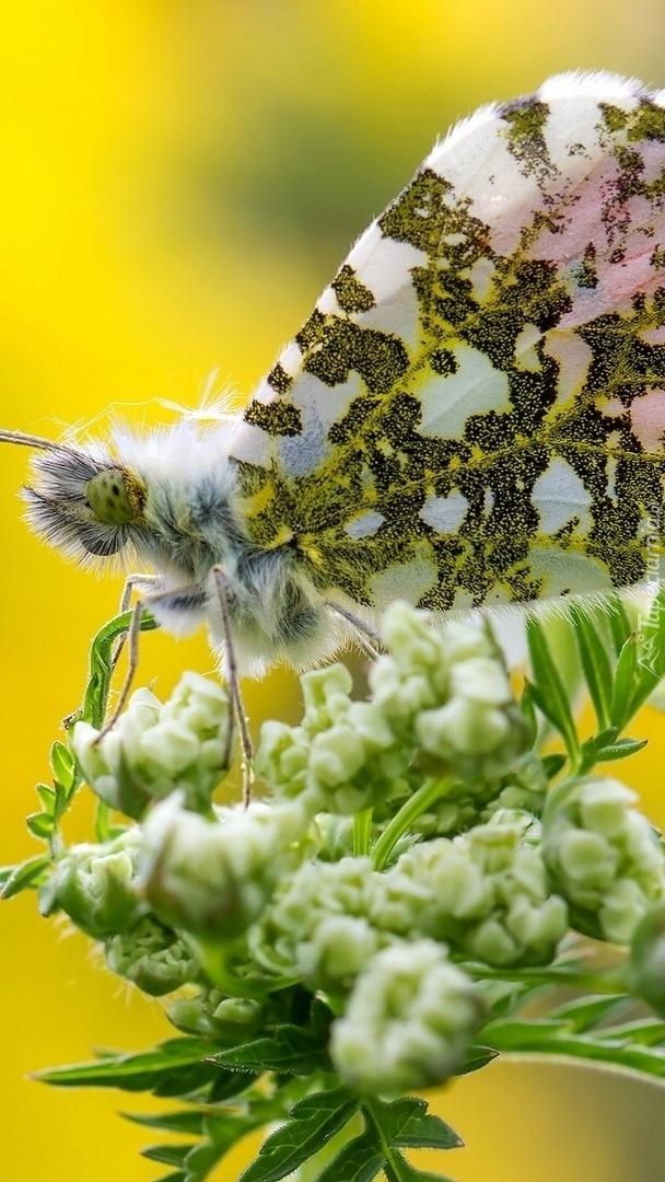 Piękny motyl na kwiatku