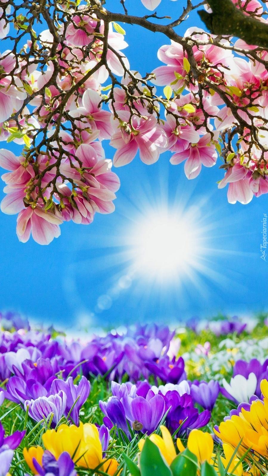 Chłodny Piękny obraz wiosny - Tapeta na telefon UQ93