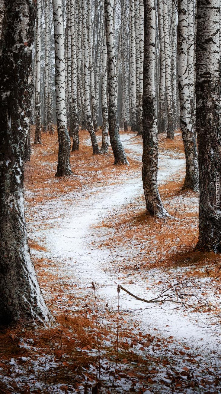 Pierwszy śnieg w lesie