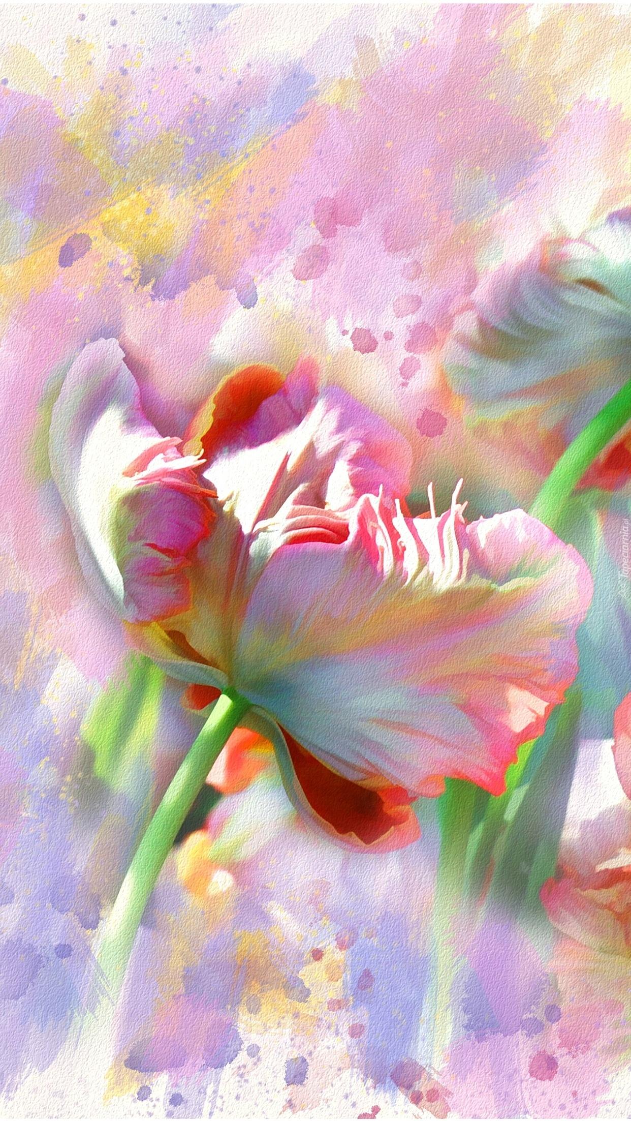 Pierzasty tulipan malowany akwarelą