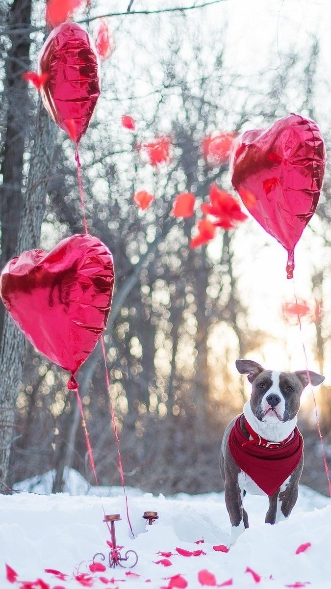 Pies i baloniki w kształcie serc w lesie