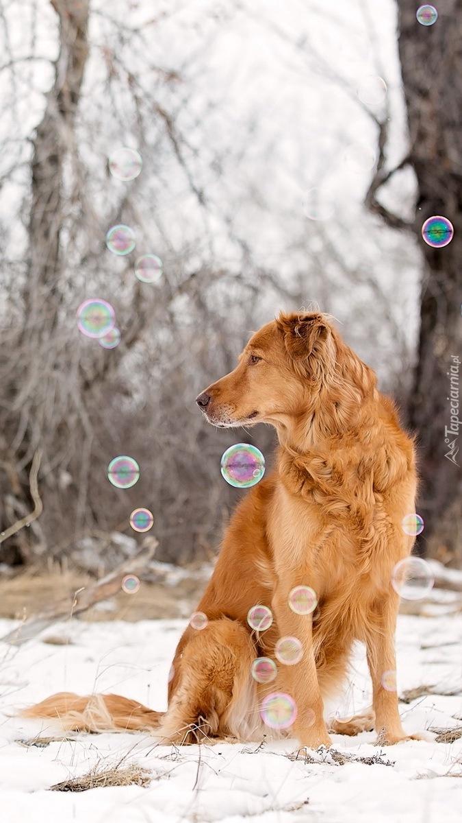 Pies i bańki mydlane