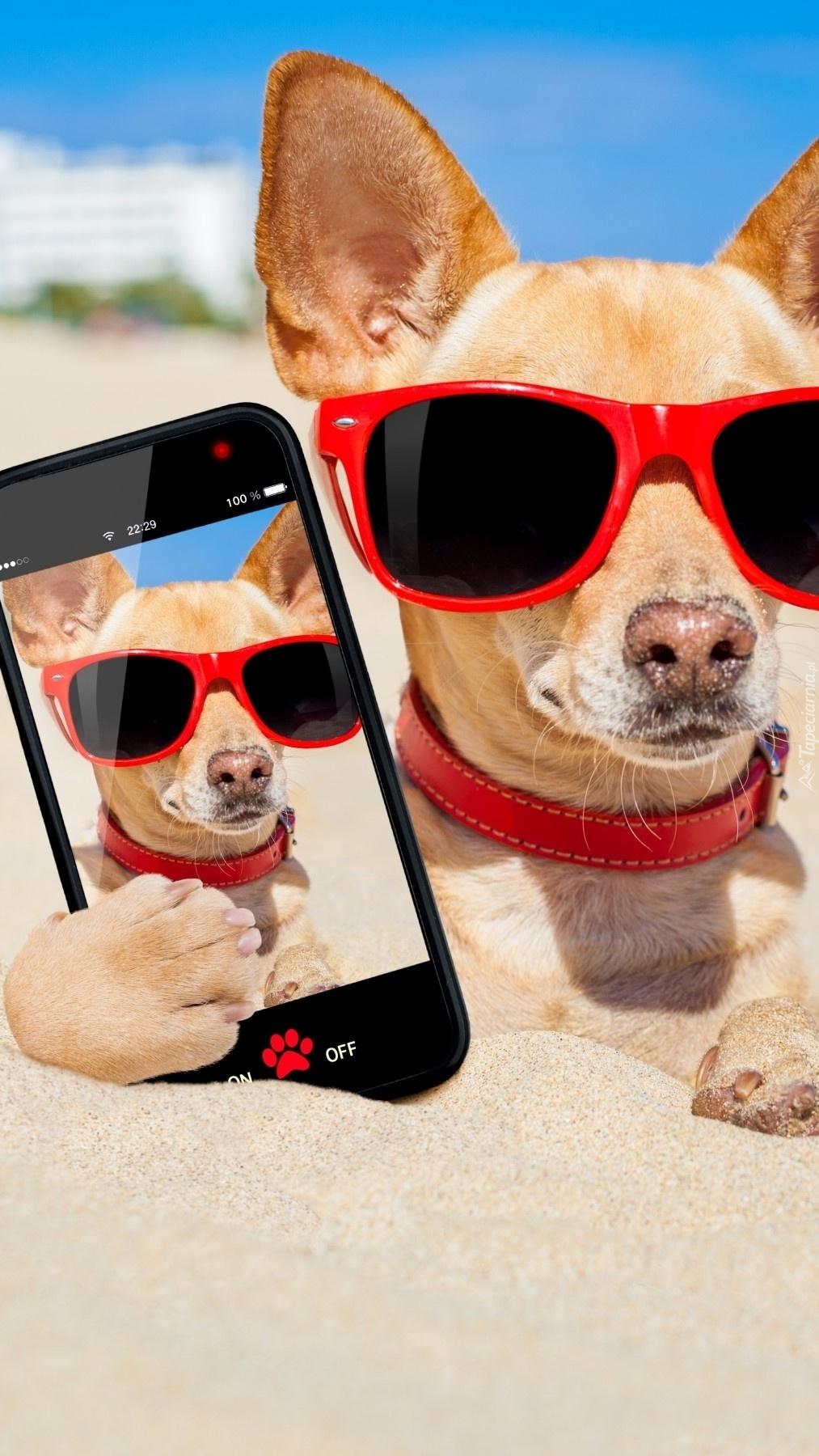 Pies i jego selfie