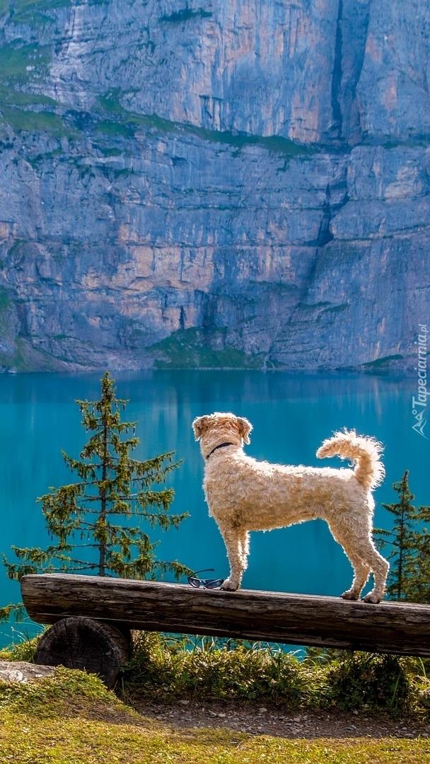 Pies na ławce obok jeziora