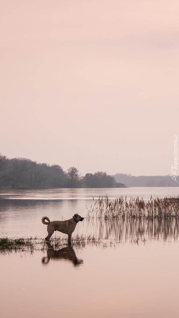 Pies nad rzeką