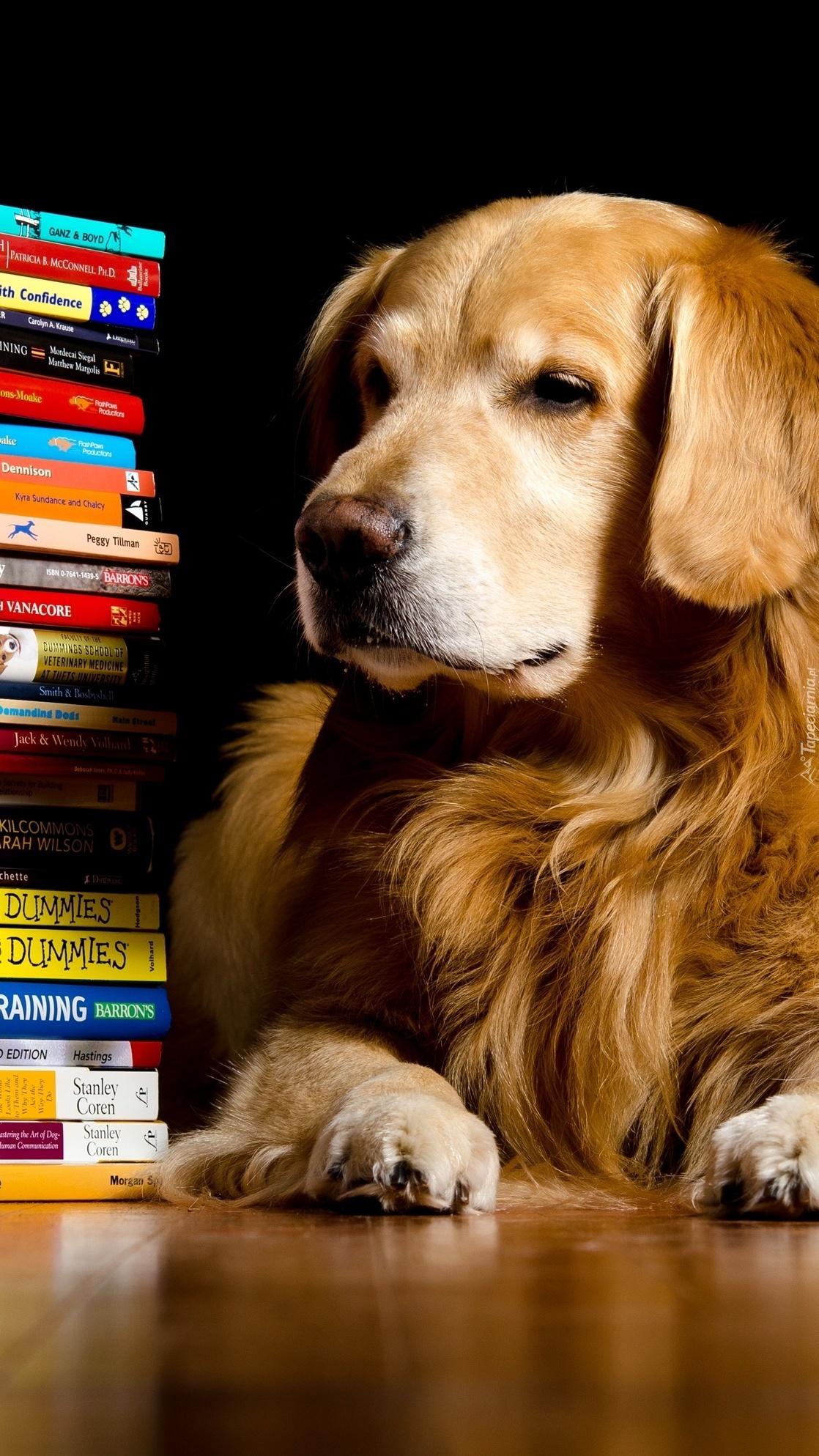 Pies obok książek