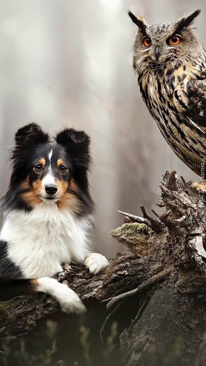 Pies obok sowy