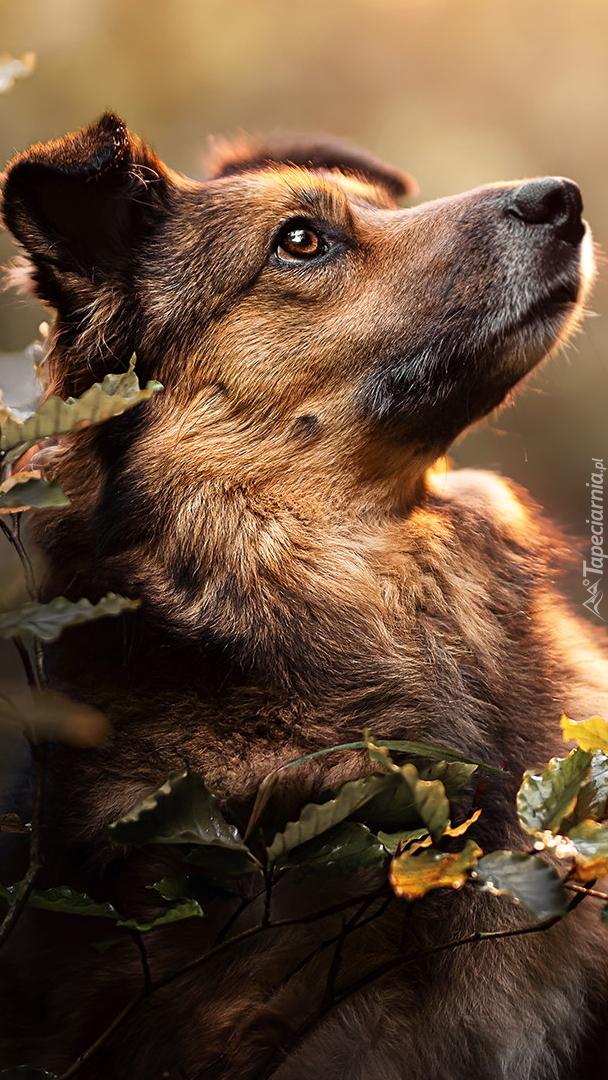 Pies przy gałązkach