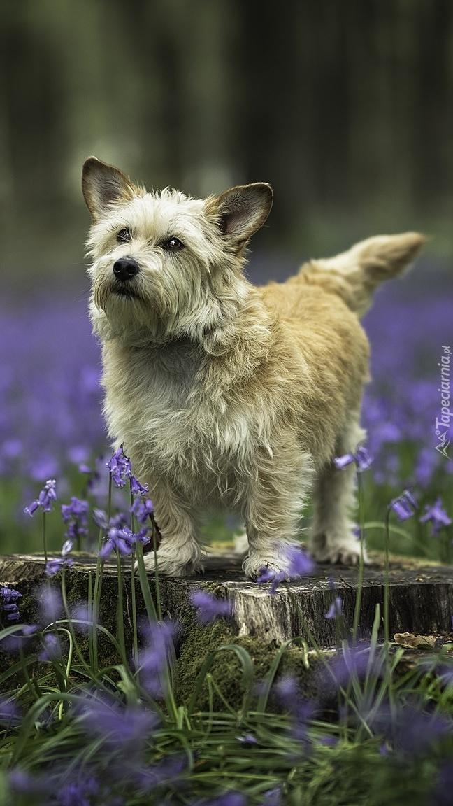 Pies stojący na pniu