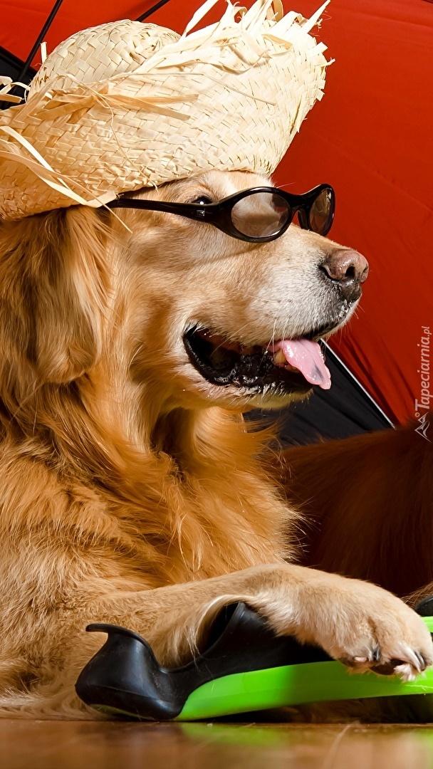 Pies w kapeluszu i okularach