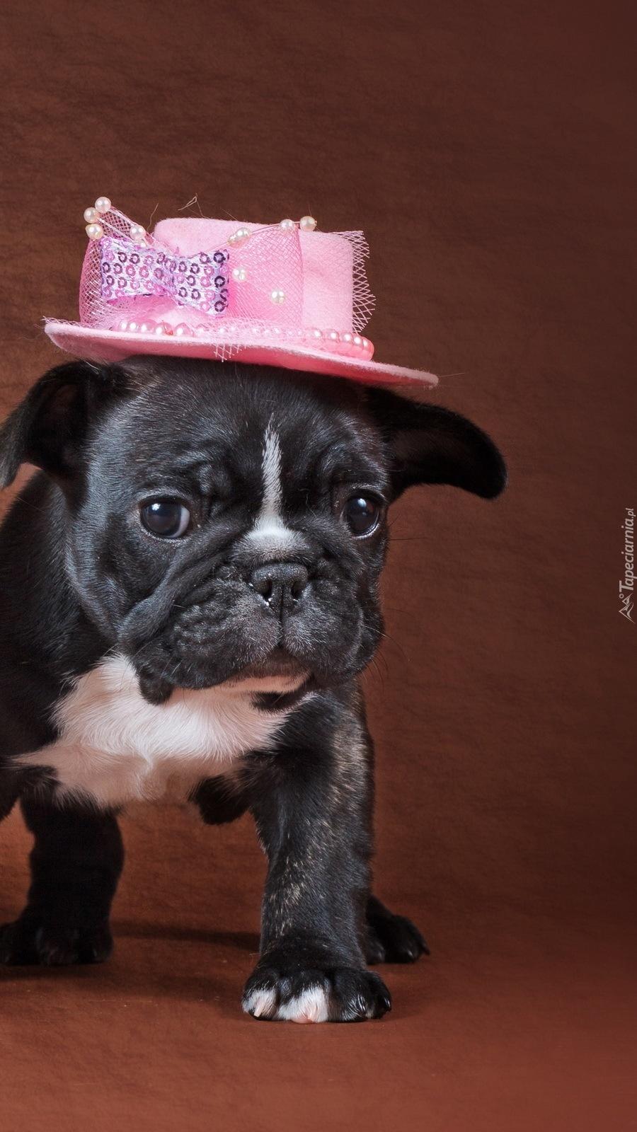 Pies w kapeluszu