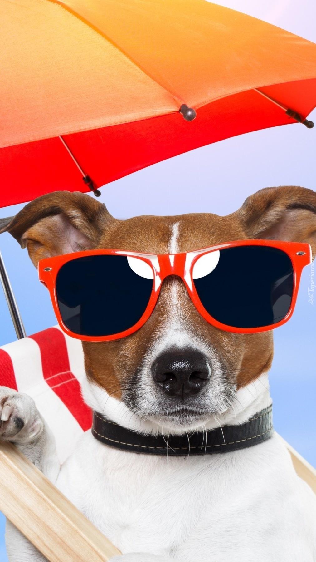 Pies w okularach przeciwsłonecznych