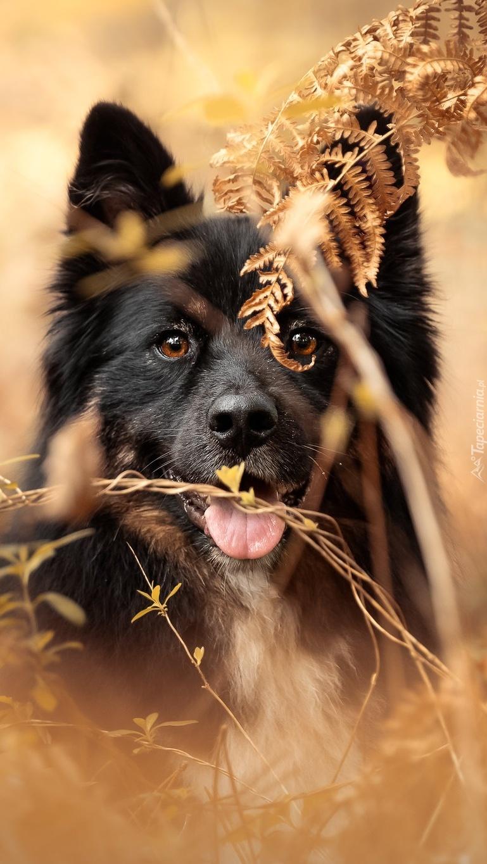 Pies w paprociach