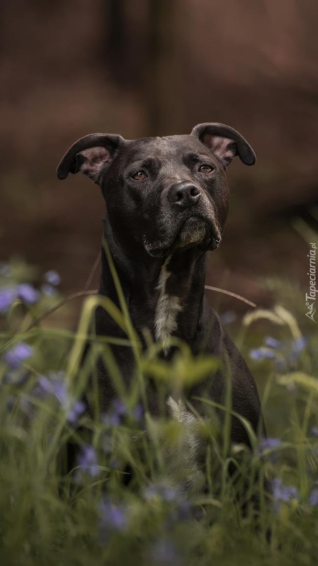 Piesek w trawie