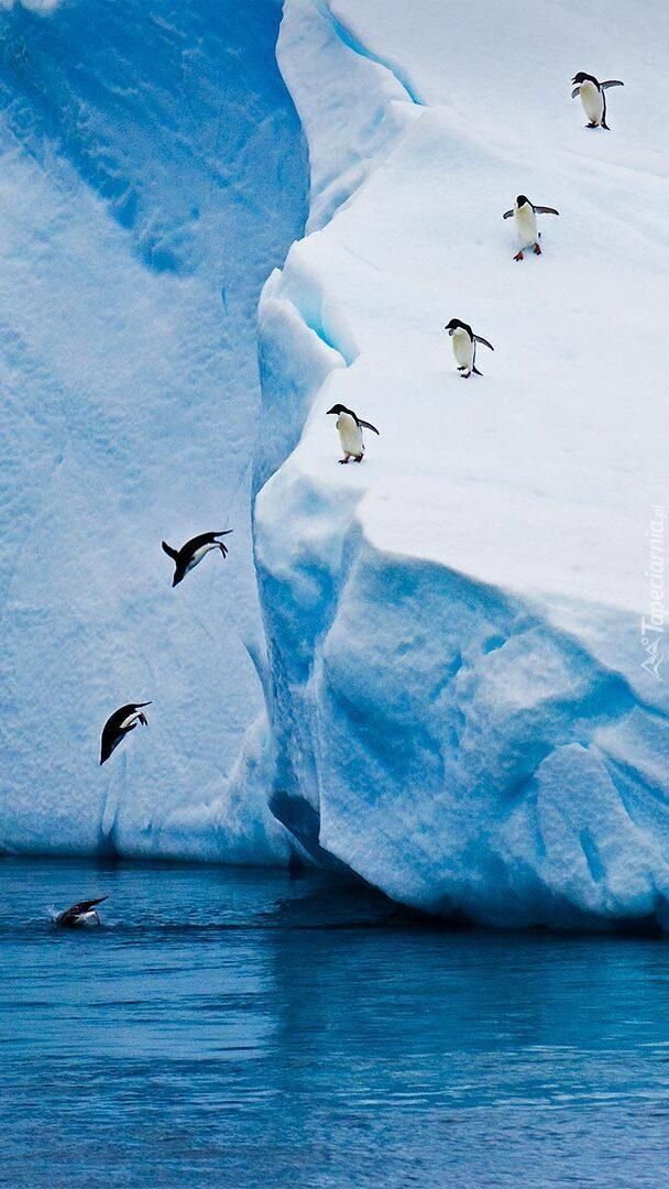 Pingwiny skaczące z góry lodowej