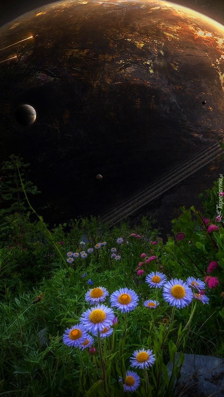 Planeta wśród kwiatów