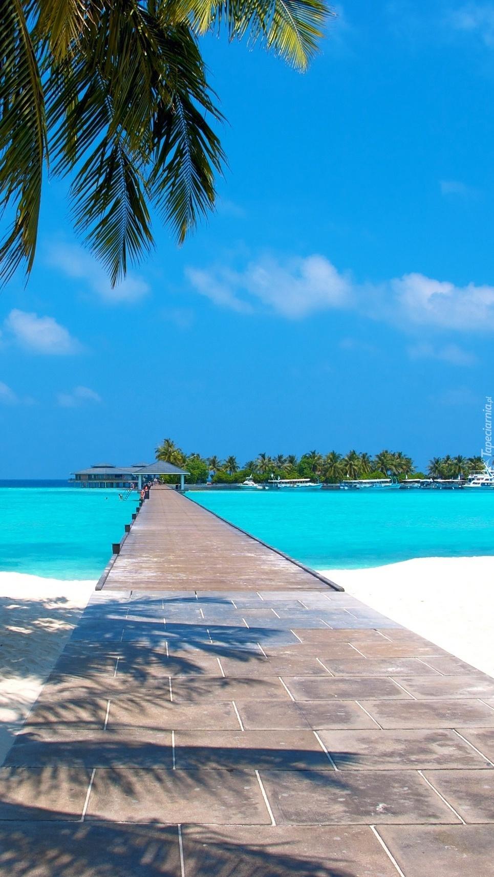 Plaża pod palmami