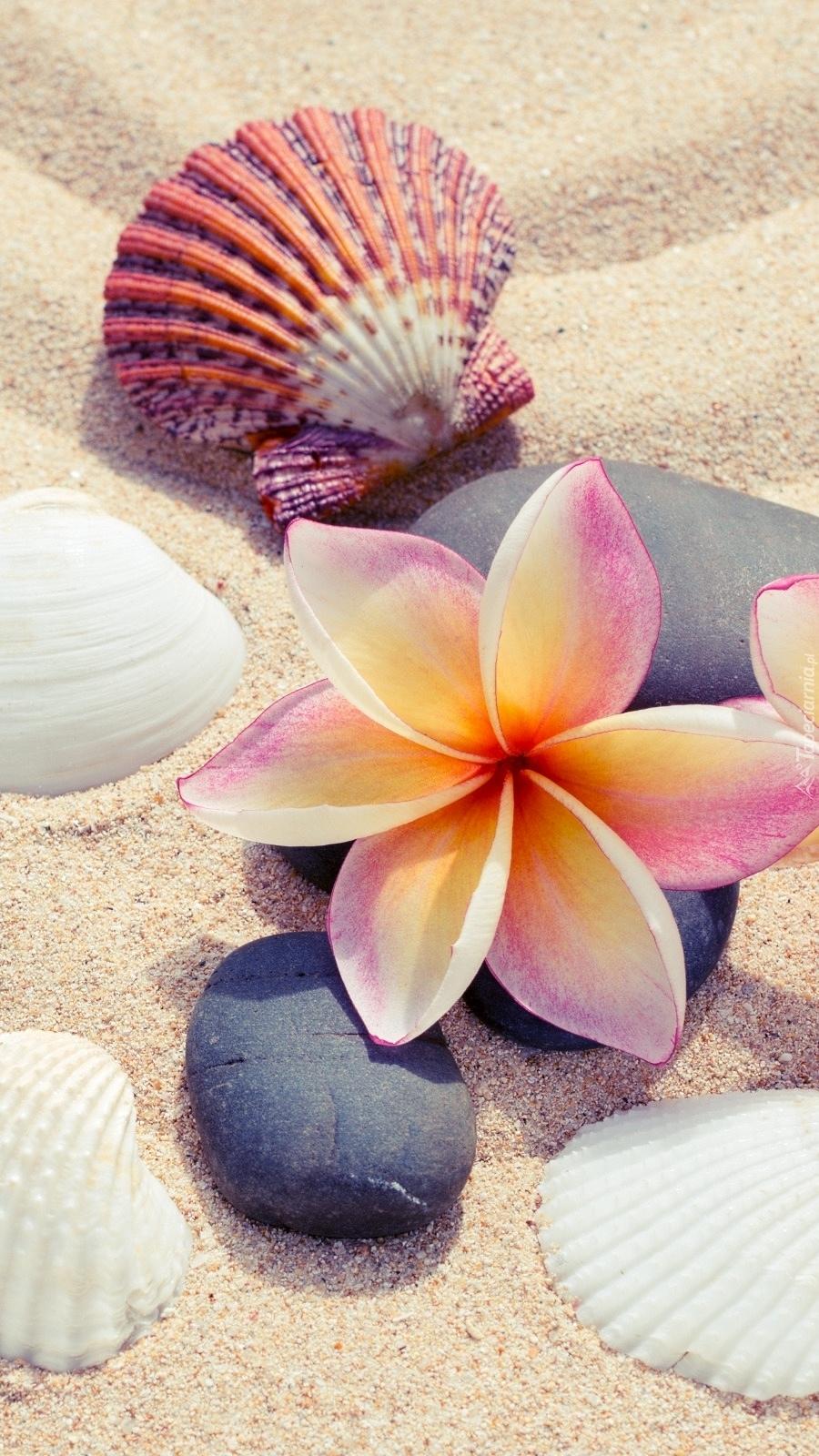 Plumeria i muszelki na piasku
