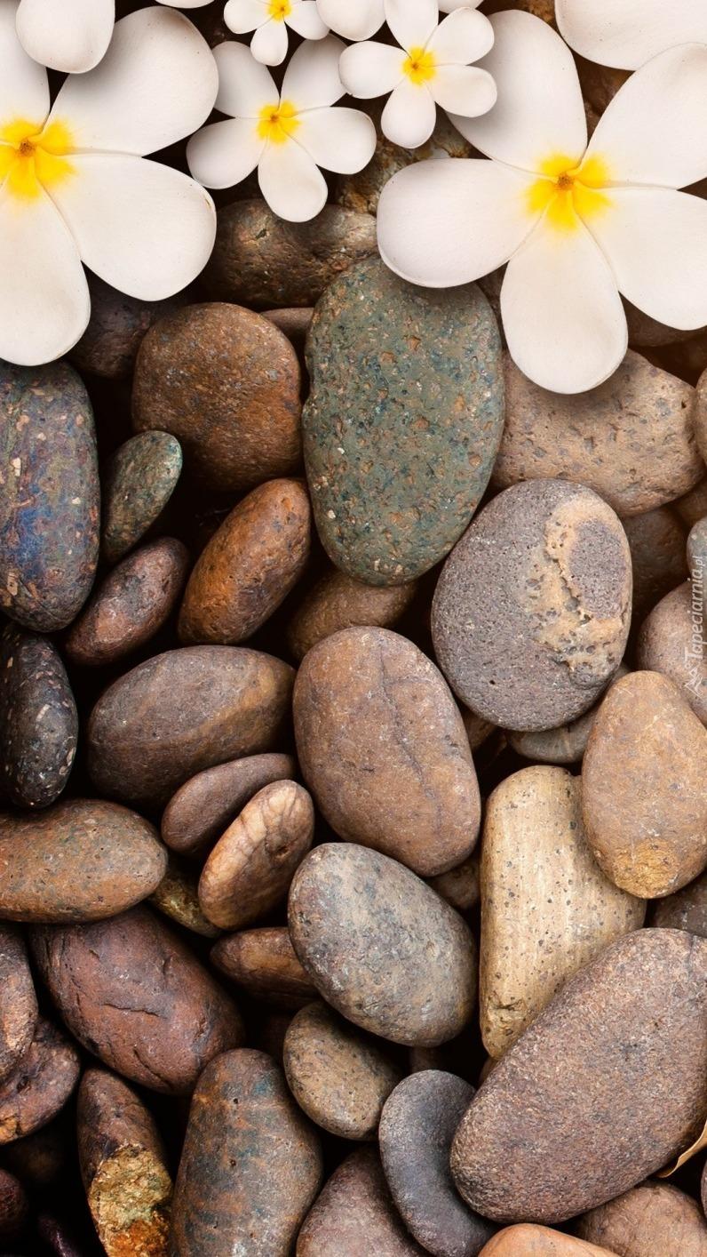 Plumeria na kamieniach