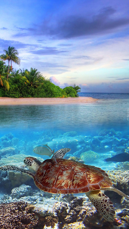 Pływający żółw wodny na rafie
