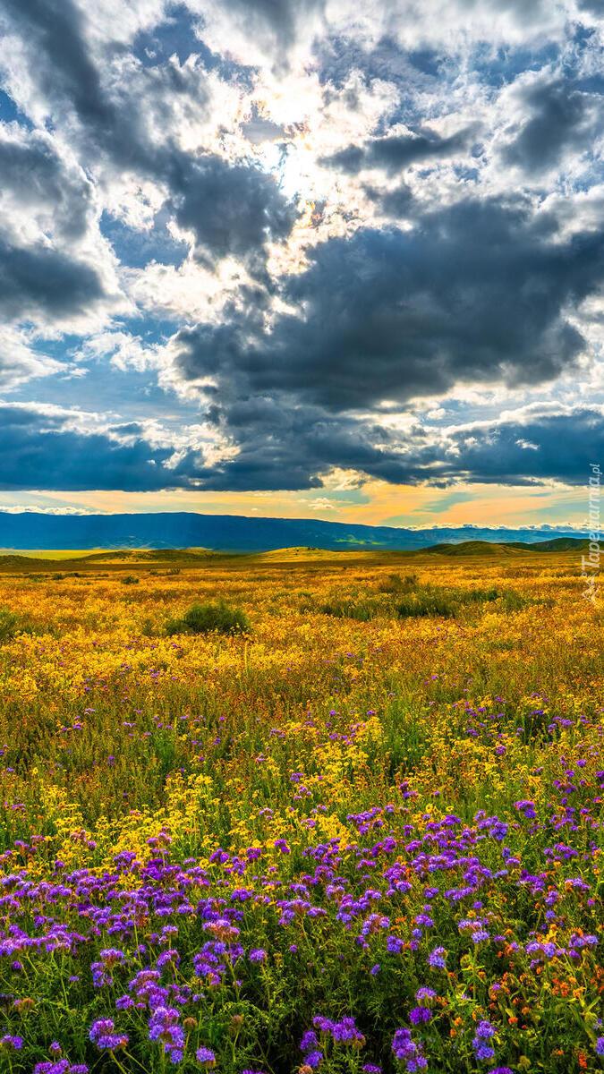 Pochmurne niebo nad łąką