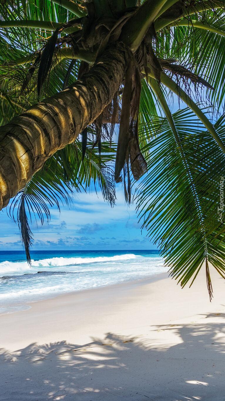 Pochylona palma na morskiej plaży